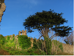 Trees on the Battlements